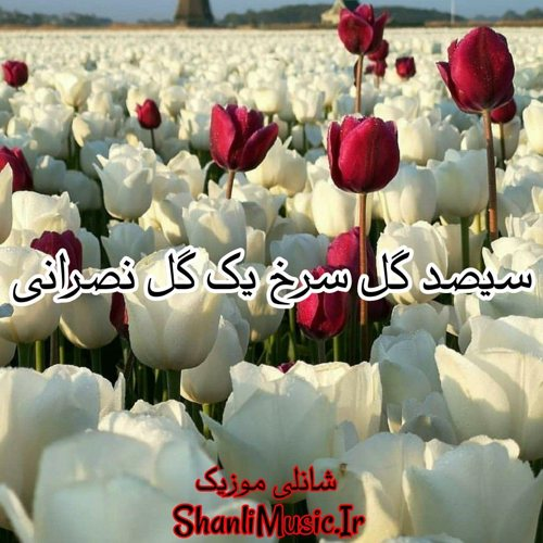 امیر عظیمی گل سرخ